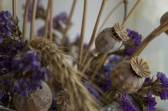 Vallmoaskar, torra violetta blommor och guld- grov spik 1 livstid fortfarande royaltyfria foton