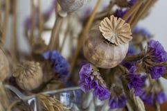 Vallmoaskar, torra violetta blommor och guld- grov spik 1 livstid fortfarande royaltyfri foto