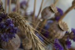 Vallmoaskar, torra violetta blommor och guld- grov spik 1 livstid fortfarande royaltyfria bilder