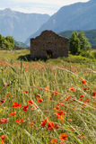 Vallmofält i Provence Royaltyfria Foton