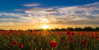 Vallmofält på solnedgång - 2 Royaltyfri Fotografi