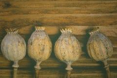 Vallmohuvud i tappningstil Royaltyfri Bild