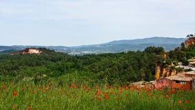 Vallmon sätter in i Roussillon Royaltyfria Foton
