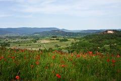 Vallmor i Roussillon Royaltyfria Foton