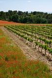 Vallmor och vingård Arkivbild