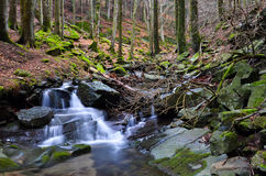 Vallombrosa forest, waterfall 5 Stock Photos