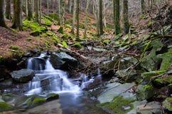 Vallombrosa skog, vattenfall 5 Arkivfoton