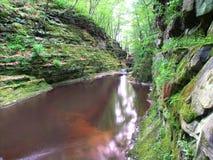 Vallons du Wisconsin de paysage de nid de vanneaux Photo libre de droits