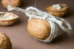 Valnöten som binds med, tvinnar på bakgrunden av valnötter på en brunt Royaltyfria Foton
