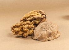 Valnötkärnor och hela valnötter på kraft papper royaltyfria bilder
