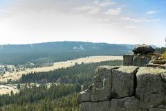 Valnötmuffin på en vit bakgrund Arkivfoto
