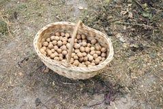 Valnötter är på jordflätverkkorgen royaltyfria bilder