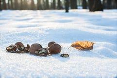 Valnötter för djur i parkera på vinter Arkivbilder