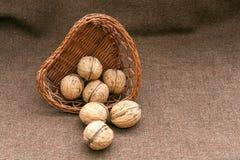 Valnötter i den gammala vide- korgen på burlap royaltyfri bild