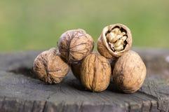 Valnötter i hårda skal, hög på träträdstrump, ett brutet skal Arkivfoton