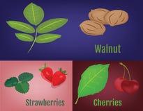 Valnötter, jordgubbar och körsbär med sidor Royaltyfri Bild