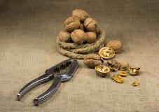 Valnötter och en nötknäppare royaltyfri foto