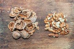 Valnötter och nötskal Arkivbild