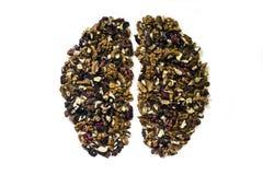 Valnötter som bildar hjärnan arkivbild