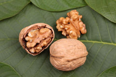 Valnötter som ligger på bladet Arkivfoto