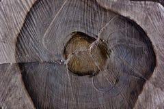 Valnöttextur fotografering för bildbyråer