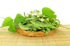 Valor papdi beans with plant part Stock Photos