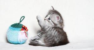 Valp av den siberian katten med julbollen Royaltyfria Foton