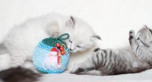 Valp av den siberian katten med julbollen Arkivfoto