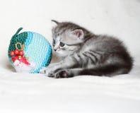 Valp av den siberian katten med julbollen Arkivbilder