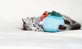 Valp av den siberian katten med julbollen Royaltyfria Bilder