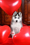 Valp för dag för valentin` s skrovlig på en texturbakgrund arkivfoto