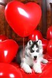 Valp för dag för valentin` s skrovlig på en texturbakgrund royaltyfria bilder
