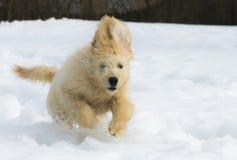 Valp i snön Royaltyfri Bild