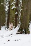 Valp i snow Arkivfoto