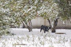 Valp i Snow Fotografering för Bildbyråer