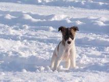 Valp i snowen Royaltyfria Bilder
