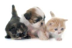 Valp, kattunge och fågelunge Royaltyfri Fotografi