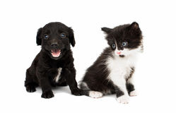 Valp med en kattunge Arkivfoto