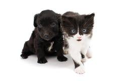 Valp med en kattunge Arkivfoton