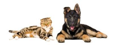 Valp och katt som tillsammans ligger royaltyfri foto