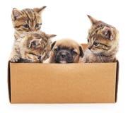 Valp och kattungar i en ask Royaltyfri Fotografi