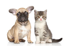Valp och kattunge fotografering för bildbyråer