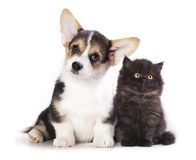 Valp och kattunge Royaltyfria Bilder