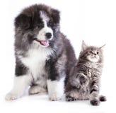 Valp och kattunge arkivfoto