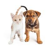 Valp och Kitten Standing Together Arkivbild