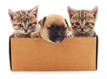 Valp och två kattungar i en ask Arkivfoto