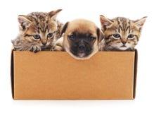 Valp och två kattungar i en ask Royaltyfria Bilder