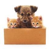 Valp och två kattungar i en ask Royaltyfri Fotografi