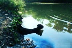 Valp som kopplar av i floden Royaltyfri Fotografi