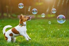 Valp som spelar med såpbubblor i utomhus- sommar royaltyfri foto